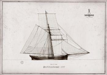 1777 HM Cutter Rattlesnake pen ink study